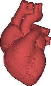 Cardiol - działanie - czy warto - Polska