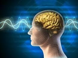 Neurocyclin – forum – jak stosować – apteka