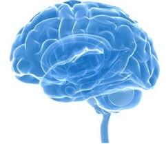 Neurocyclin - dla lepszej pamięci – gdzie kupić – opinie – skład
