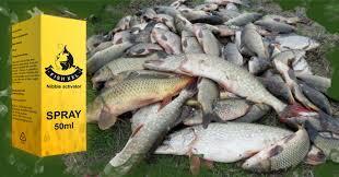 Fish XXL - aktywator brań – allegro – sklep - skład